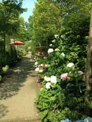 Gartenakademie Hortensie