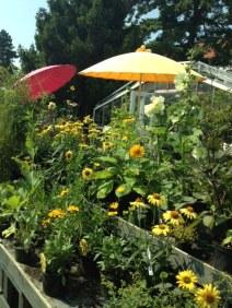 Gartenakademie gelb