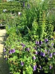 Gartenakademie blau