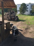 Zoo Peter Lenne schule